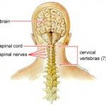 Estruturas da dor cervical